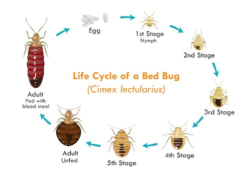 Can You Wash Bed Bugs Out Of Pillows