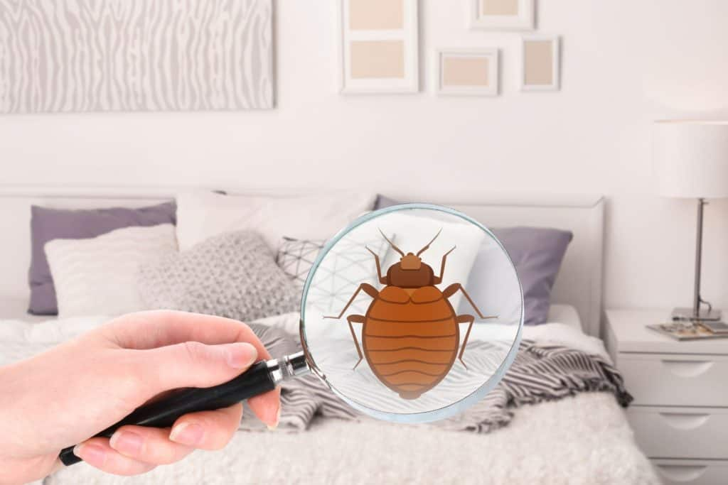 las vegas bed bug treatment